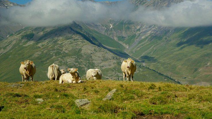 Alla Bibliosteria di Corna Imagna la rassegna 'Cucina delle Alpi'
