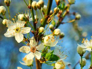 primavera in valle imagna