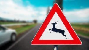 incidente con animali selvatici