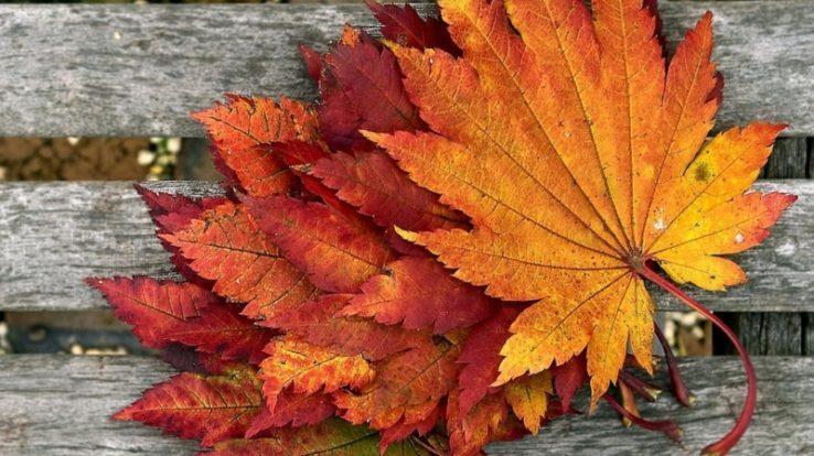 Sagre d'autunno a Brumano: cene gustose e la transumanza